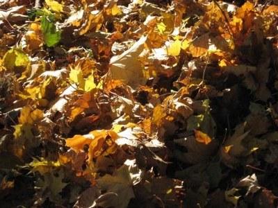 automne   feuilles st