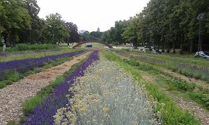 Jardin essentiel 1