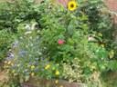 Wiels in Bloemen